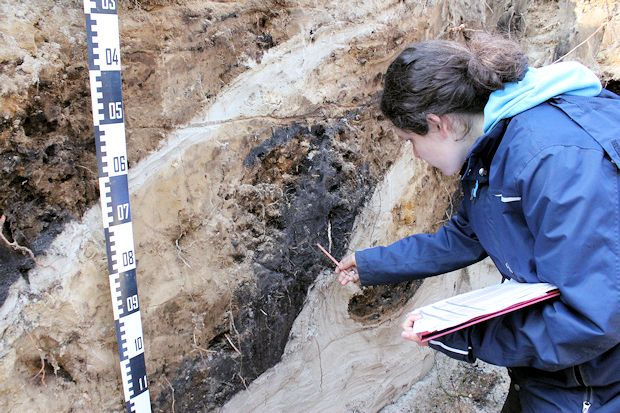 Sampling of a 120 cm deep ploughed forest soil close to Gifhorn, Northern Germany