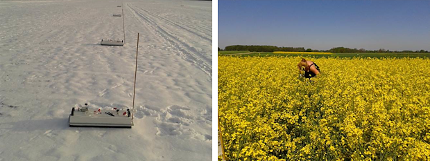 Greenhouse gas measurements in winter and during rape bloom