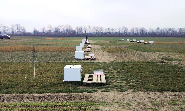Chamber measurment on plots with different catch crops  after spring harvest