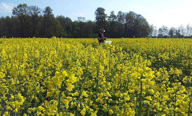 Nitrous oxide flux measurements during rape bloom near Munich (Germany)