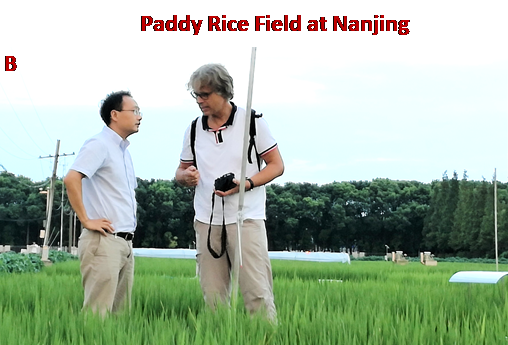 Field site at Nanjing (left Prof. Yan, right Dr. Well) (b)