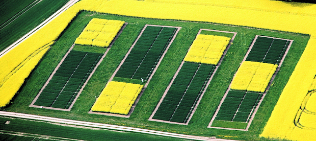 Field experiment with oilseed rape – wheat – barley crop rotation near Kiel, Germany.
