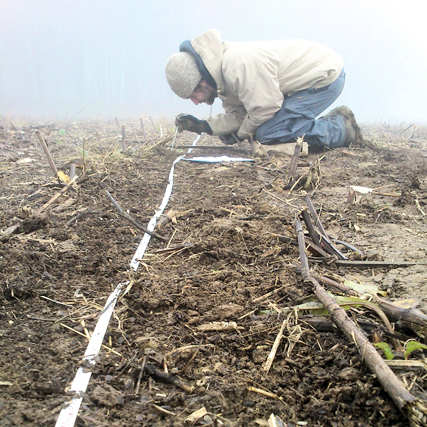 Monitoring of earthworm casts along a transect in a cup plant field